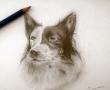 5月份画的一只狗狗
